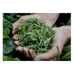 批发瀑泉绿茶   找合作伙伴