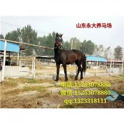 莱西市哪里有卖伊犁马的