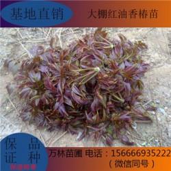 葫芦枣树苗哪里卖的便宜