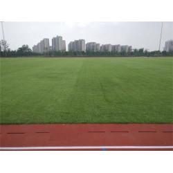 大量出售广东足球场建设-萍乡足球场建设一