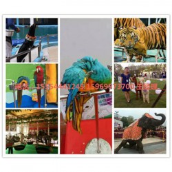 吉安马戏团里表演的动物出租百鸟展资源