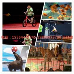 动物马戏表演宜春市马戏狮子表演
