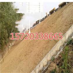 公路护坡绿化固土椰丝植草毯厂家直销