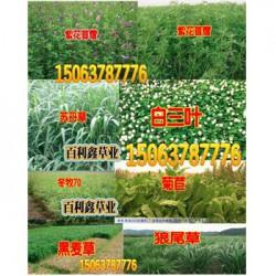 绿化花草种类优质高产牧草品种简介