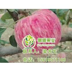 洛川苹果礼盒、洛川苹果、景盛果业(查看)