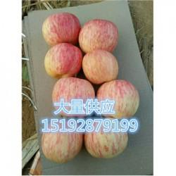 今 日 那里的水晶红富士苹果基地批 发 价