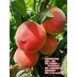 桃苗种植利润|武汉桃苗种植|枣阳桃花岛
