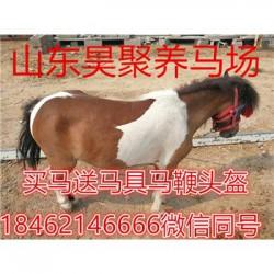 岳阳马具用品羊驼养殖场价格
