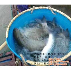 炖鲩鱼|渔夫水产贸易有限公司(在线咨询)|韶