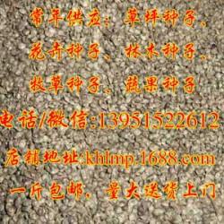 快活林苗木(图)、火棘种子哪儿买、火棘种子