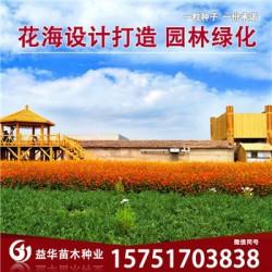 甜荞麦种子丨江苏春百宝种业