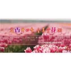 青箱子种子丨江苏春百宝种业