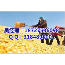 收购玉米,民发养殖,长期收购玉米