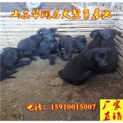 辽宁葫芦岛黑狼犬小狗多少钱一只