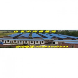 郑州巴马香猪养殖场新余有卖巴马香猪小猪苗