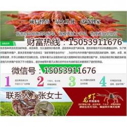 同安哪里有品种好的虾苗卖—淡水龙虾养殖技