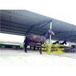 武清区马匹交易市场在哪里
